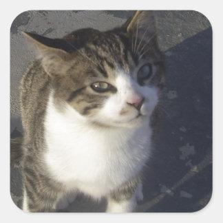 友好的な子ネコ スクエアシール