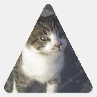 友好的な子ネコ 三角形シール
