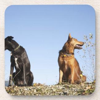 反対の方向を見ている2匹の若い犬 コースター