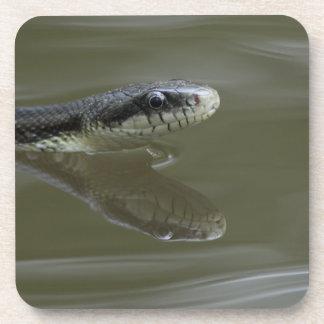 反射の水ヘビの水泳 コースター