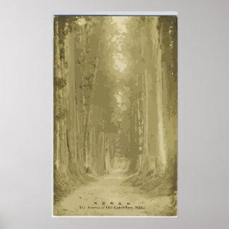 古いヒマラヤスギ木日光のヴィンテージの道 ポスター