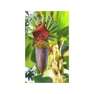 古いフロリダのバナナのキャンバスのプリント キャンバスプリント