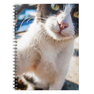 古いボートのリラックスさせるな近いの猫Bosphorusの海 ノートブック