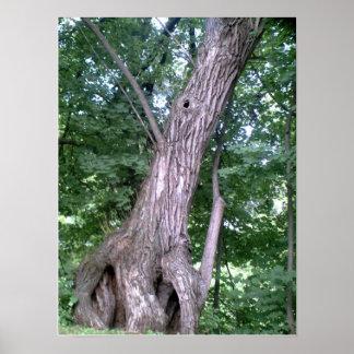 古い兵士の木ポスター ポスター