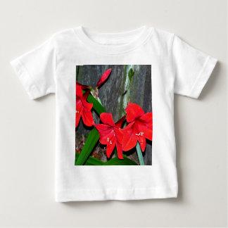 古い塀による赤いアマリリス ベビーTシャツ