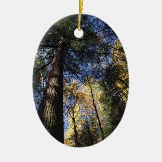 古い成長のアメリカツガ木 セラミックオーナメント