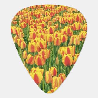 古い納屋の前の春のチューリップの開花 ギターピック
