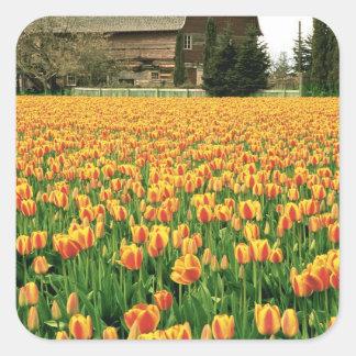 古い納屋の前の春のチューリップの開花 スクエアシール