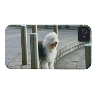 古い英国の牧羊犬2 Case-Mate iPhone 4 ケース
