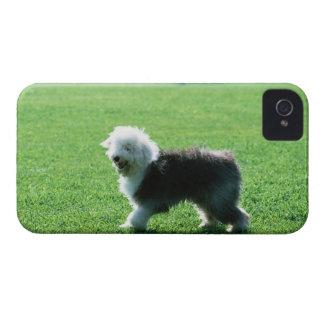 古い英国の牧羊犬 Case-Mate iPhone 4 ケース