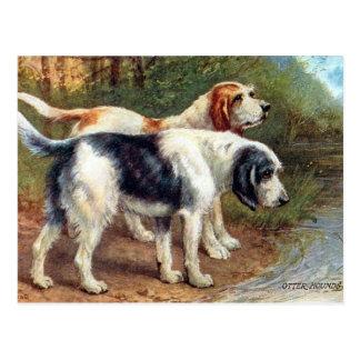 古い郵便はがき-カワウソ猟犬 ポストカード