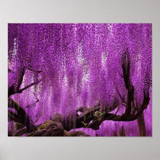 古代藤の紫色のラベンダーによってはポスターが開花します プリント