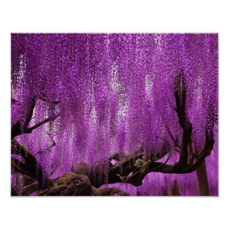 古代藤の紫色のラベンダーによってはポスターが開花します ポスター