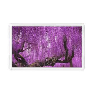 古代藤の紫色のラベンダーによっては虚栄心が開花します アクリルトレー
