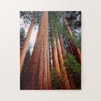 古成長のセコイアレッドウッドの木 ジグソーパズル