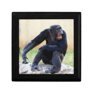 叫ぶチンパンジー ギフトボックス