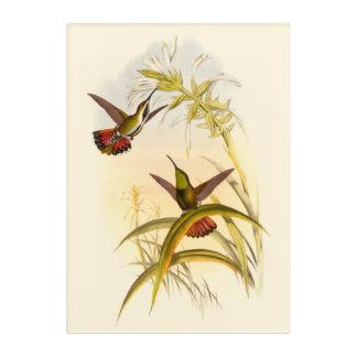 同じ花のために向けている2羽のカラフルなハチドリ アクリルウォールアート