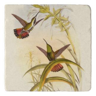 同じ花のために向けている2羽のカラフルなハチドリ トリベット