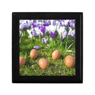 咲くクロッカスの近くにある5個の緩い卵 ギフトボックス