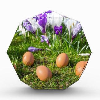 咲くクロッカスの近くにある5個の緩い卵 表彰盾