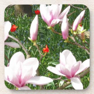 咲くピンクのマグノリア01 コースター