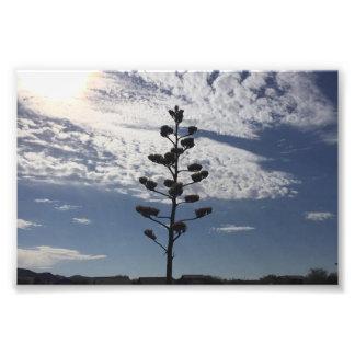 咲くリュウゼツランの6X4写真のプリント フォトプリント