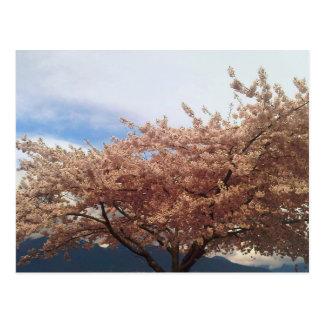 咲く桜の郵便はがき ポストカード