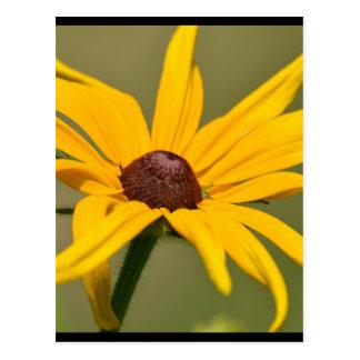 咲く黒によって注目されるスーザン ポストカード