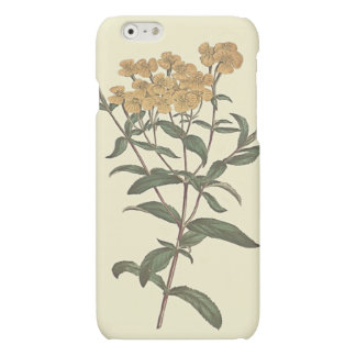 唐辛子のマリーゴールドの植物の絵