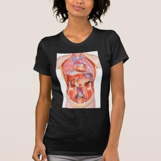 器官が付いている人間の胴の体モデル Tシャツ