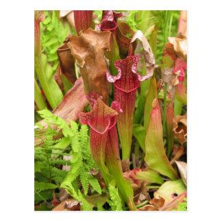 嚢状葉植物 ポストカード