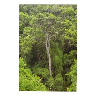 固有の森林、Knysna-Amatoleの空中写真 ウッドウォールアート