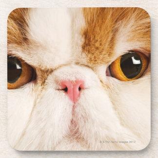 国内猫。 さらさの道化師のペルシャ語。 終わり コースター