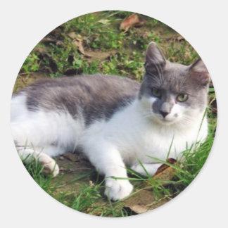 国内猫 ラウンドシール