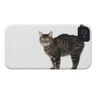 国内男性の虎猫猫の地位 Case-Mate iPhone 4 ケース