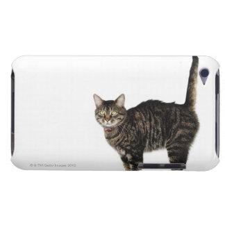 国内男性の虎猫猫の地位 Case-Mate iPod TOUCH ケース