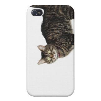 国内男性の虎猫猫の地位 iPhone 4/4Sケース