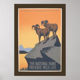 国立公園-野性生物のヴィンテージ20 x 28を維持して下さい ポスター