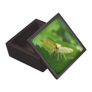 土硫黄のガの優れたギフト用の箱 ギフトボックス