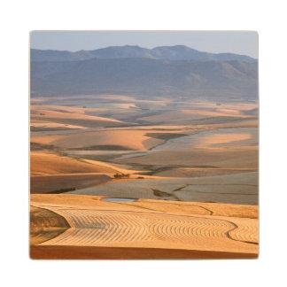 圧延の小麦畑。 Caledon、Overberg ウッドコースター