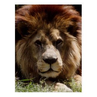 地図書のライオン ポストカード