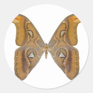 地図書の蝶 ラウンドシール