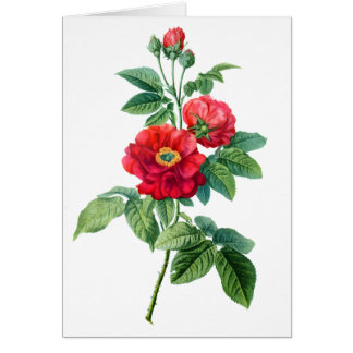 地域の赤いバラ カード