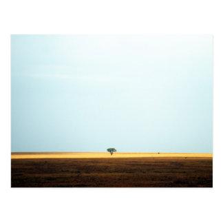 地平線のアカシアの木。 アフリカ。 ポストカード