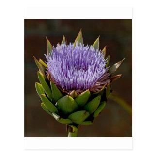 地球アーティチョーク、花のCynara Cardunculus、 ポストカード
