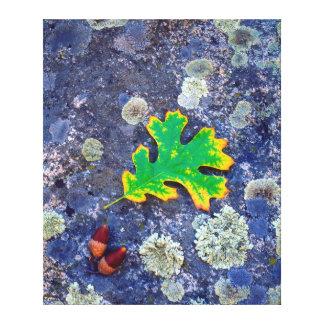 地衣のカシの葉そしてドングリは石を覆いました キャンバスプリント