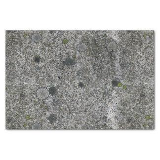 地質学のコケが付いている灰色の花こう岩の石 薄葉紙