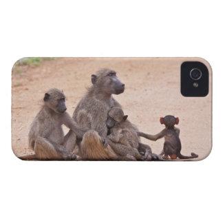 地面に坐るヒヒ家族 Case-Mate iPhone 4 ケース