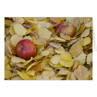 地面のりんご カード