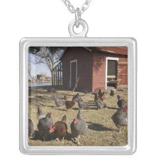 地面を働かせている鶏は鶏小屋Cliburnに近づきます シルバープレートネックレス